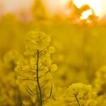 Växter och kärnor